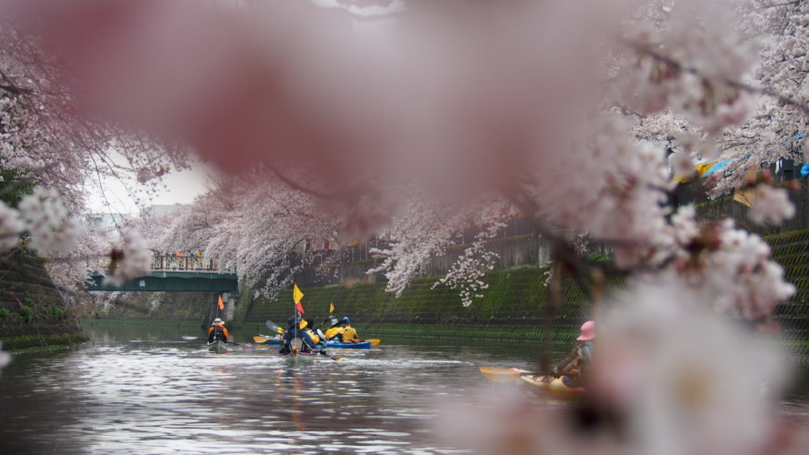 お花見カヤックツアー2019